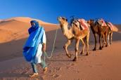 Tuareg Camel Train, Sahara Desert, Morocco