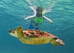 snorkel-con-tortuga-marina
